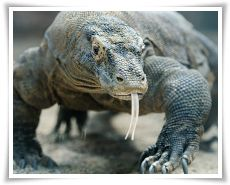 komodo-island-tours-and-travel-tour-package-thumb_2