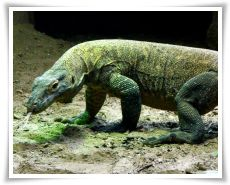 komodo-island-tours-and-travel-tour-package-thumb_4