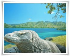 komodo-island-tours-and-travel-tour-package-thumb_5
